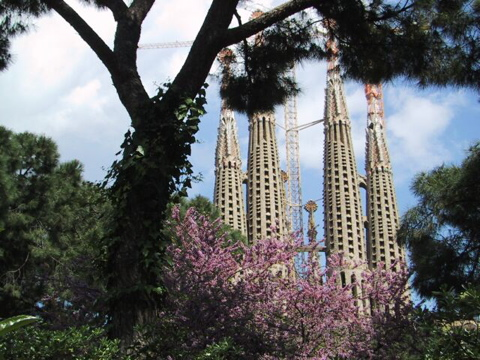 Sagrada through the trees